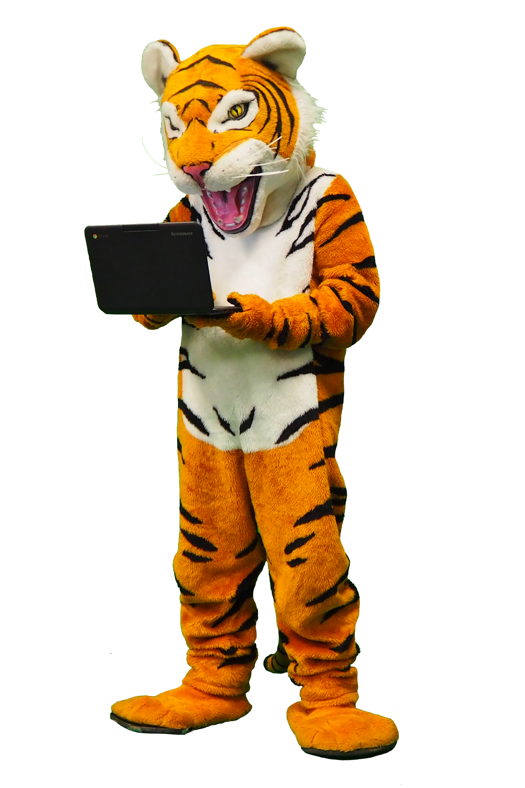 Tiger using a Chromebook